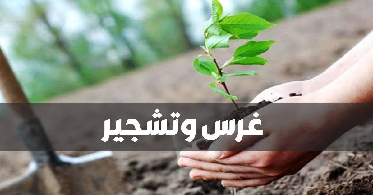 مبادرة إغرس شجرة ترجع الجزائر خضراء - GREEN BIKE